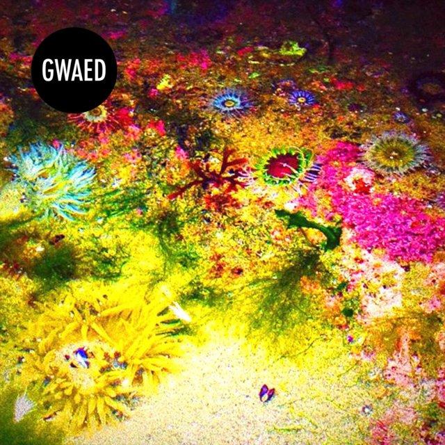 Gwaed